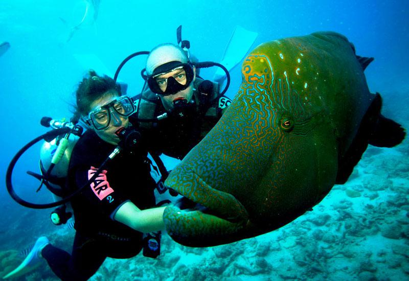 Diving & Snorkeling Tours